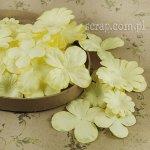 hortensje i margerytki - zestaw żółty