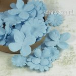 hortensje i margerytki - zestaw niebieski