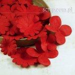 hortensje i margerytki - zestaw czerwony