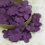 hortensje i margerytki - zestaw fioletowy