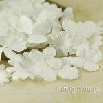 nowe hortensje i margerytki - zestaw #40 (białe)
