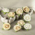 różyczki Prima Sherwood - Truffle