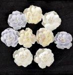 Kwiatki Prima - Frost - Snow Drop Roses
